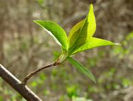 Najväčšia sila rastliny sa skrýva v púčiku.